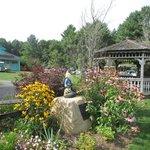 American honey bee garden