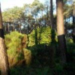 der Blick in die Kieferwälder