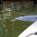 The dolphins were swimming right next to and under my kayak!