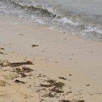 грязный пляж после прилива