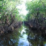 mangrove channel