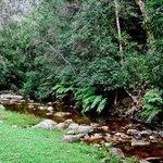 Jubilee Creek Picnic Spot and Walking Trail