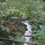 A waterfall adds atmosphere to the Rainforest biome