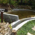 Sensory pool near dining area