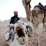 Sunset camel ride