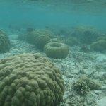 coraux devant le kuramathi