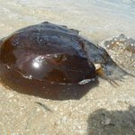 We even saw some Horseshoe Crabs!