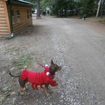 Walking the lobster pup in the campground