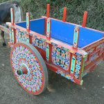 Ox cart at the Trapiche Coffee Plantation