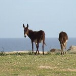 Dipkarpaz Milli Parki - Karpaz National Park Wild Donkey Protection Area