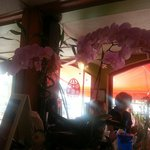 Nice arrangement of orchids!