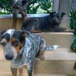 Martz Farm dogs!