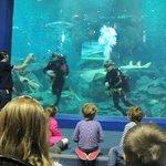 The main tank feeding the sharks