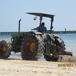 Tractor collecting seaweed