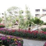 Giardini visti dalla stanza