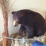 Cumming black bear display