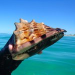 A beautiful conch found (and returned!) on the Serenity Bay side.