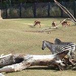 Zebras and Deer