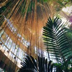 The Conservatory Rainforest is the real deal