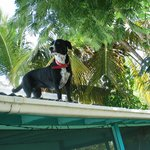 Sophie - on the lookout for iguanas