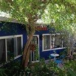 shade tree in garden