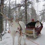 Reindeer Sarfari