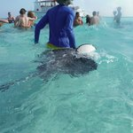 Our guide bringing over a ray