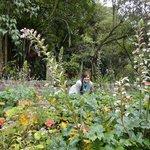 gardens at La Quinta