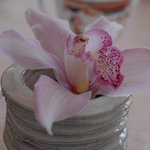 Detail of an Orchid at our table