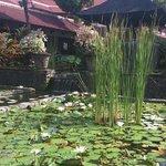 ホテル玄関前の池です。
