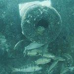 Fish flock around a sunken cannon