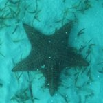 Starfish through the bottom of tour boat