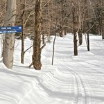 Intimate ski trails that are goomed to perfection.