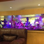 Beautiful aquarium in the main lobby
