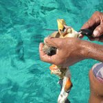 Cleaning the Conch for a yummy marinade.
