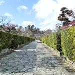 屋敷の生垣と石畳