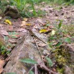 Lizard on hiking trail at Loterie