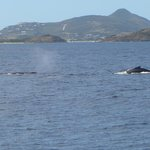 Whales off the coast of pinel island