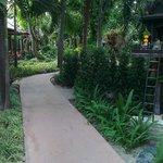 Внутренний сад. Дорожка в ресторан