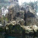 Shore birds enclosure