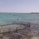 Conch pens where they are raised