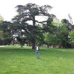 Pitti Palace Garden