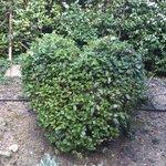 deco du petit jardin privé