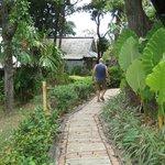 Trädgården runt husen