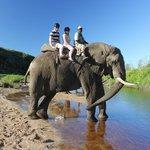 Elephant walk!