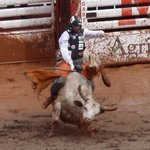 Stampede rodeo- Bull riding competition