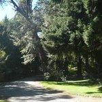 El bosque que forma parte del predio de Tunquelén