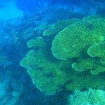 beim schnorcheln, schöne korallen