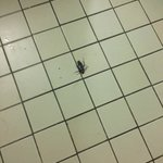 4/4 roaches killed (from third night) @ bathroom floor