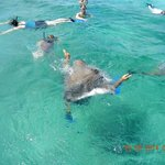 Snorkeling at Shark Ray Alley